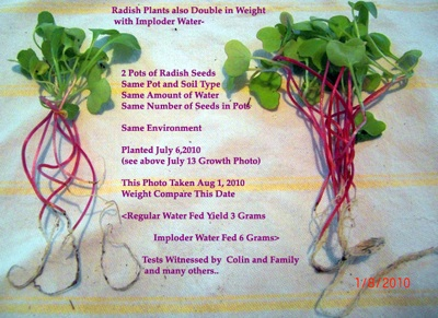 radish results double